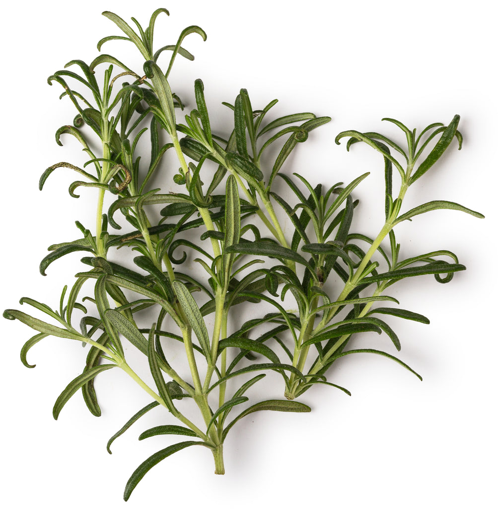 Fresh Rosemary Extract
