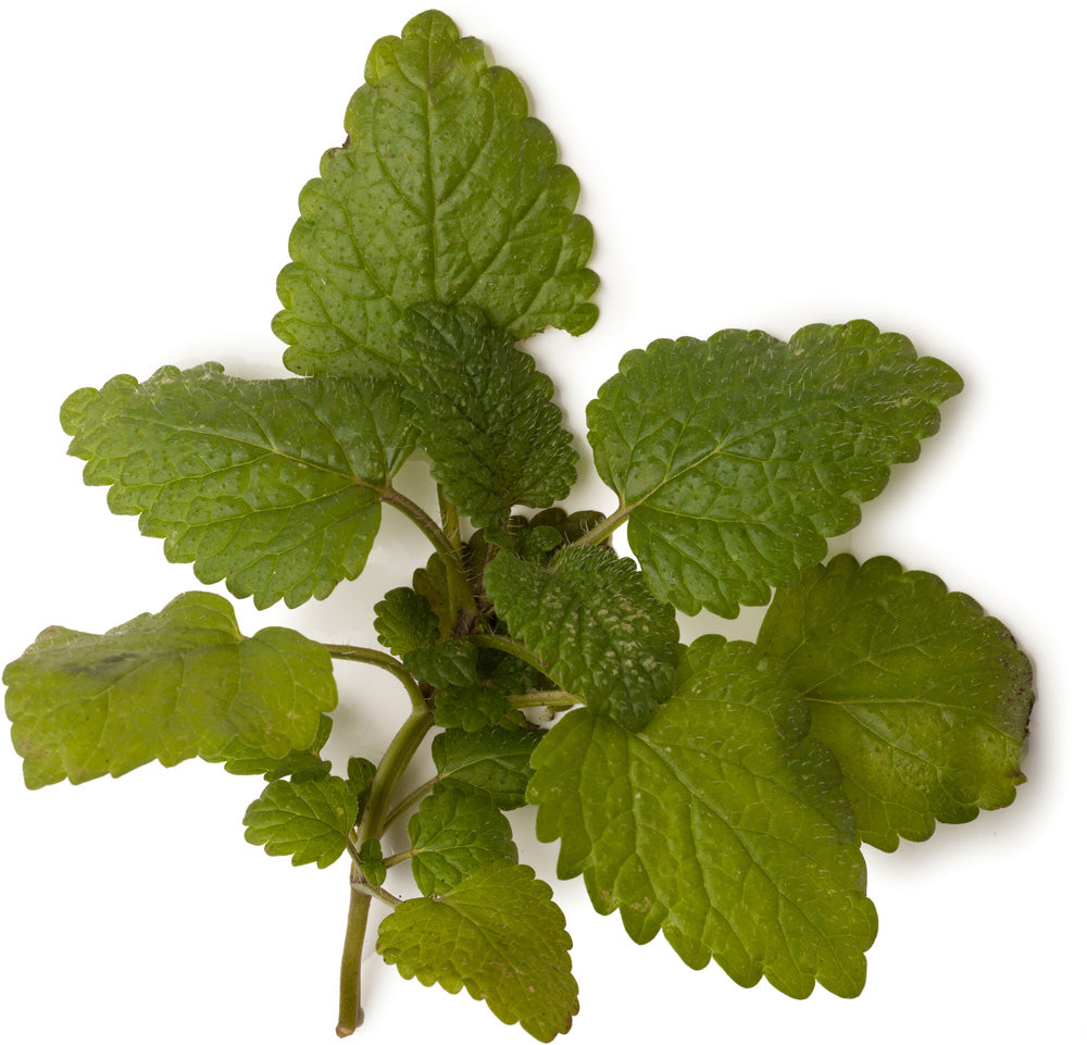 Lemon Balm Infusion