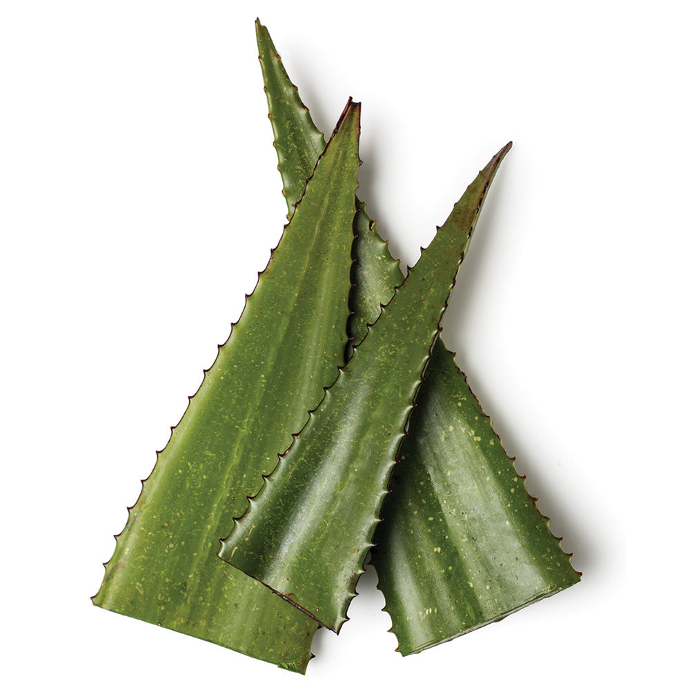 Fresh Aloe Gel