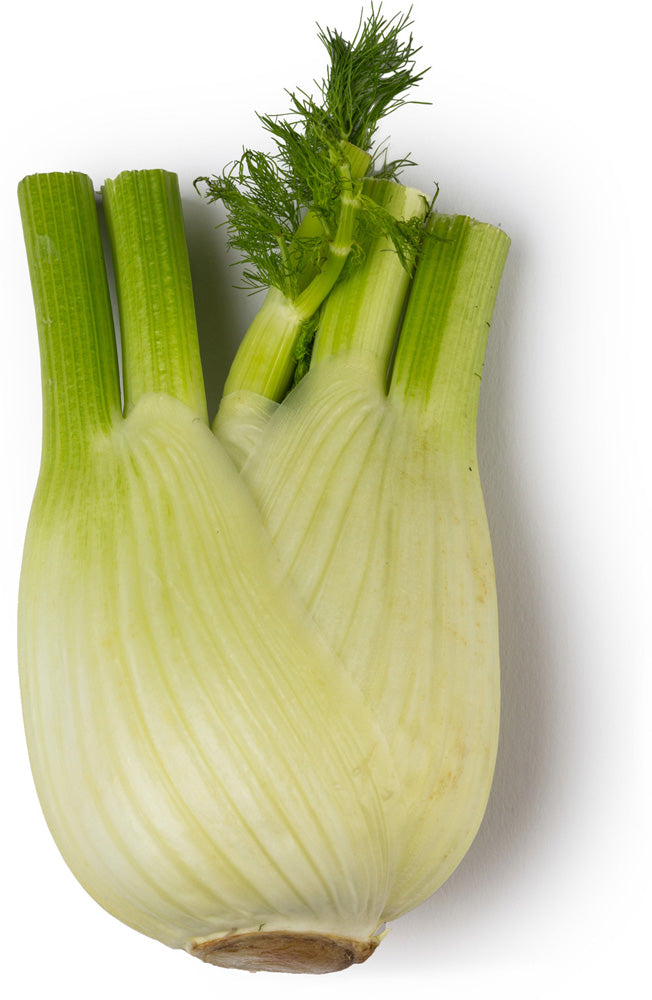 Fresh Fennel Juice