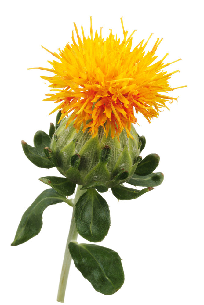Safflower Petal Extract