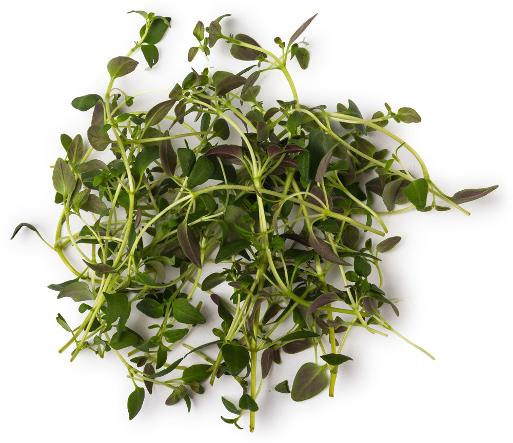 Thyme; Rosemary and Tea Tree Infusion