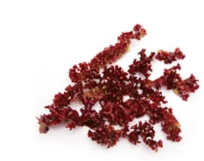 Astaxanthin: What it is and Why you Need it in your Skincare Products