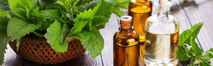 Peppermint - Pure Organic Essential Oil - Mayans Secret News