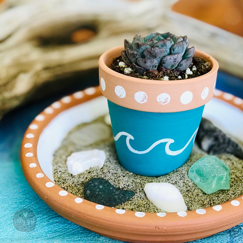 Mini Zen Garden Succulent Craft Kit with a Succulent and Beach Treasures - Friendship Craft Gift - Thinking of You Craft Kit - Send a Gift