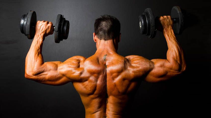 That Missing Ingredient while Building your Muscles