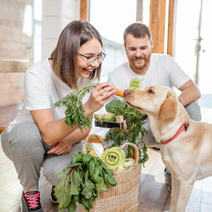 Why Is Vegan Dog Food The Best Option For Companion Animals?