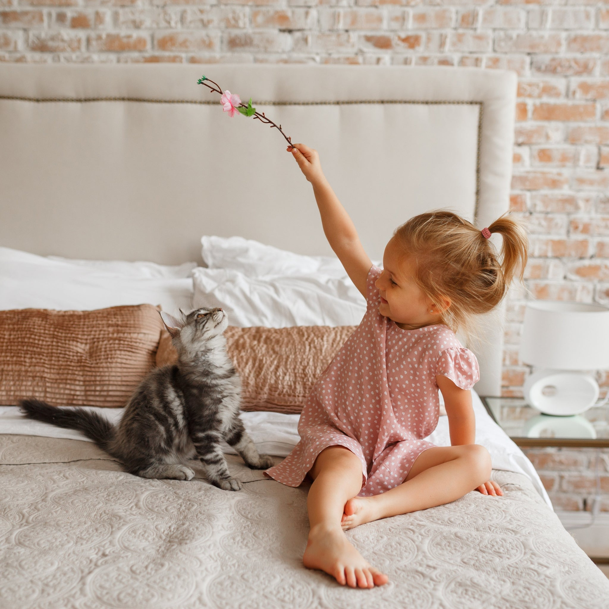 Playing With Your Cat: Cat Toys & Games