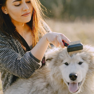 How to Choose the Best Dog Brush for Grooming