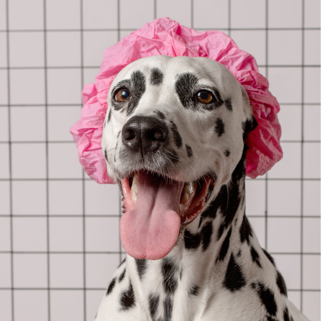 Dog Grooming At Home: Tips for Beginners