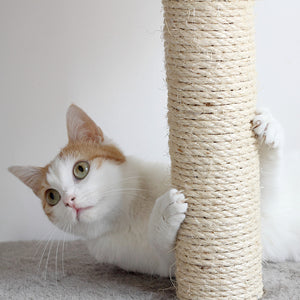 Choosing the Best Scratching Post for Cats