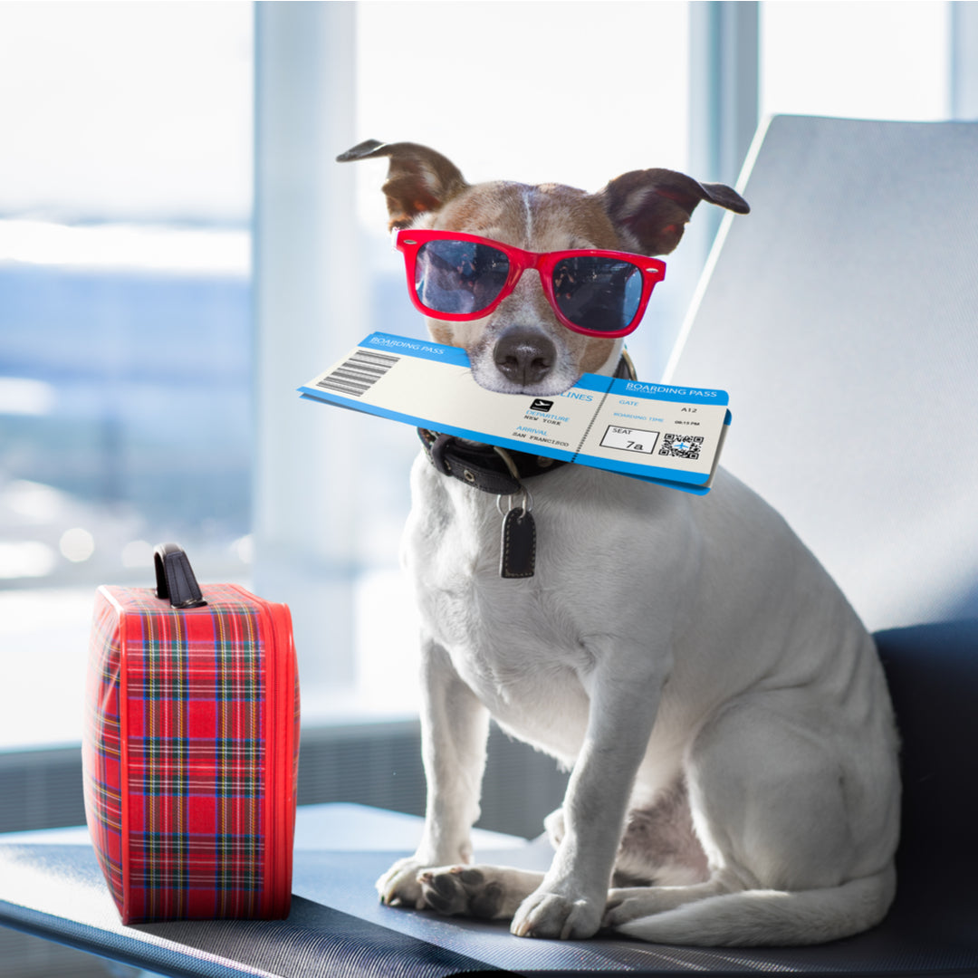 dog with airline ticket and suitcase