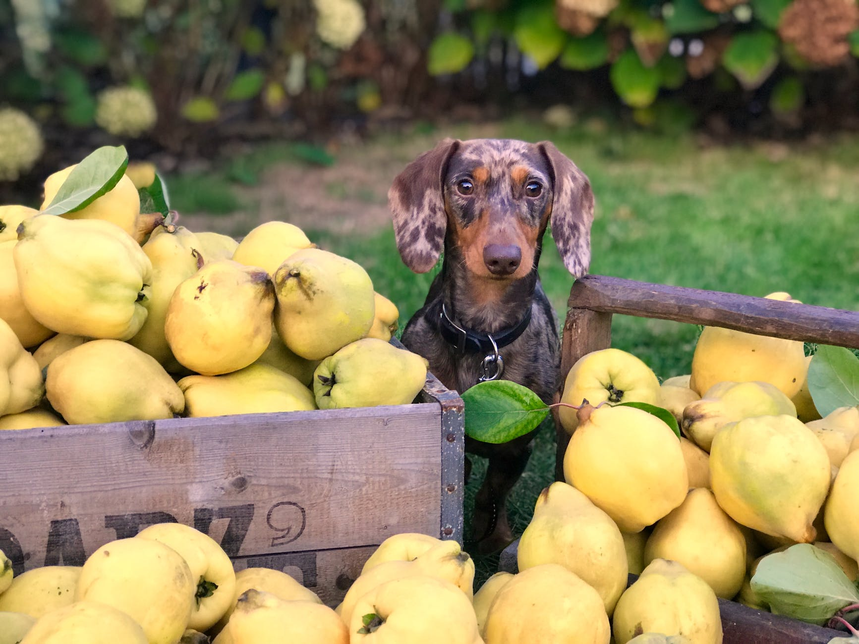 fruits-and-dog