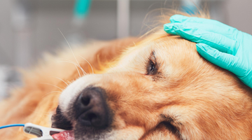 Did You Know, Air Can Kill Your Dog When Swallowed?