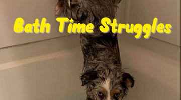 Bath Time Struggles: How To Get Your Dog To Love Taking Baths