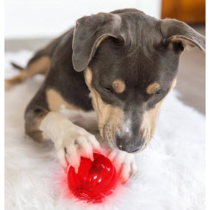 Dog playing with babble ball