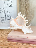Frilly Murex Shell