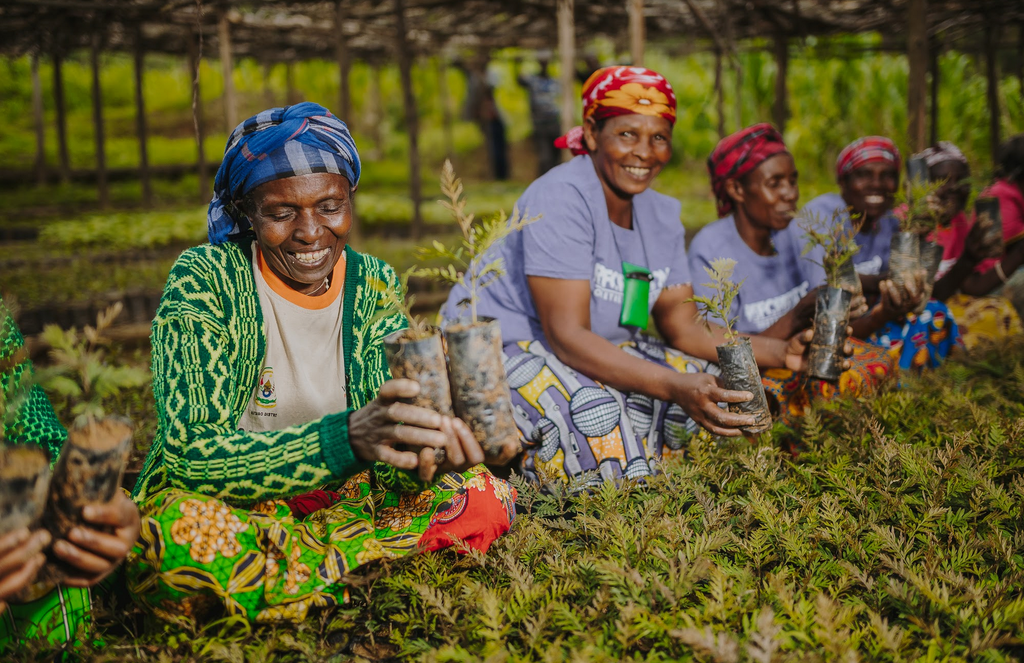 20K Trees Planted for Agroforestry by Women's Coop in Rwanda