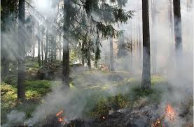 California Wildfire Reforestation