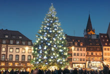 The Magic of Christmas: Savory delights and holiday traditions on a Rhine River cruise (port-to-port cruise)