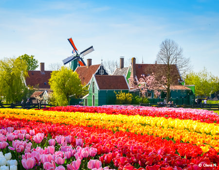 Springtime in Holland (port-to-port cruise)