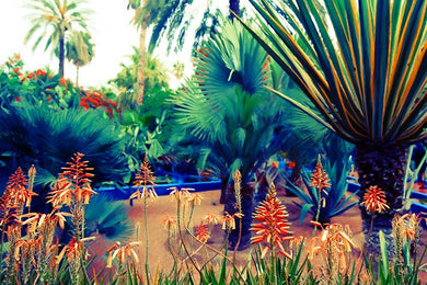Majorelle Wild - Limited Edition Fine Art
