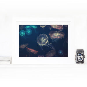 Moon Jellyfish - limited edition Fine Art Photo Print