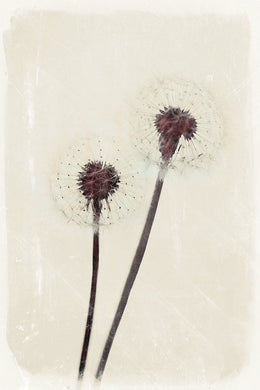 Dandelion Heart - limited edition fine art