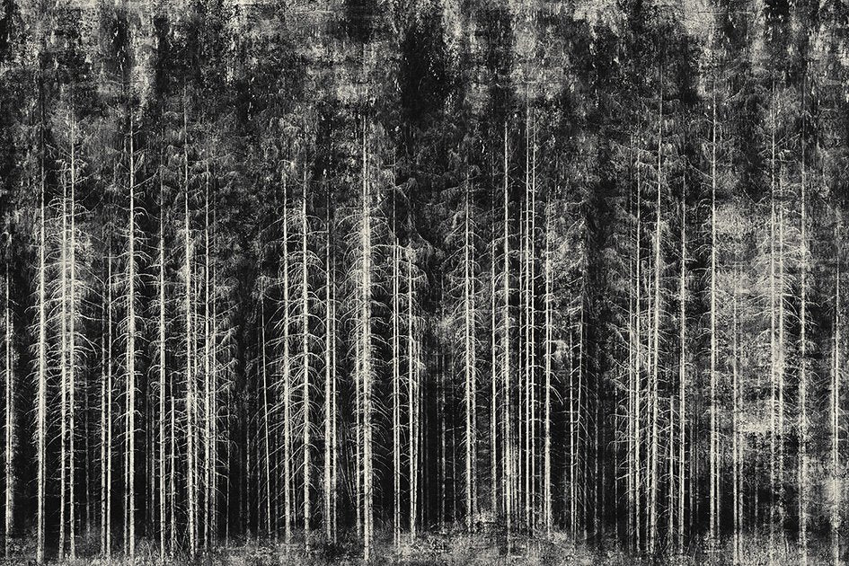 Into the woods - fine art limited edition print