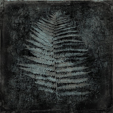 Fern Charcoal - Open edition fine art