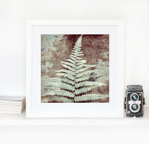 Ancient Fern closer to cold - Limited edition fine art
