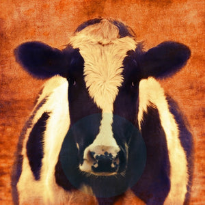 Holy Cow Cinema - Limited Edition Fine Art photo print