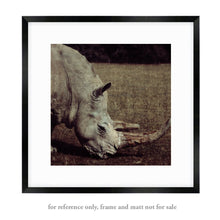Load image into Gallery viewer, Rhinoceros - Limited Edition Fine Art photo print