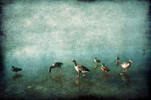 Load image into Gallery viewer, Ducks on Blue Ice- Limited Edition Fine Art