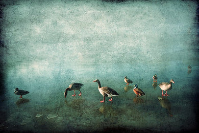 Ducks on Blue Ice- Limited Edition Fine Art print