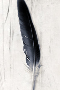Feather plate It is Written - Limited edition fine art