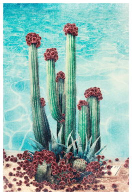 Cactus Pool - Limited Edition Fine Art print