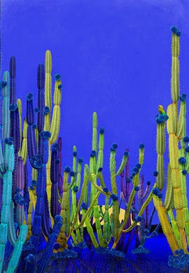 Cactus Blue - Limited Edition Fine Art