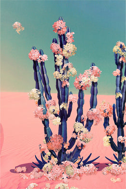 Cactus Flower - Limited Edition Fine Art print