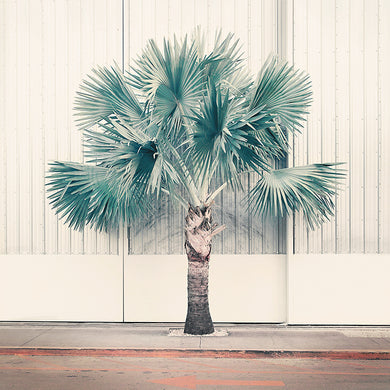 Palm Park - Limited Edition Fine Art print
