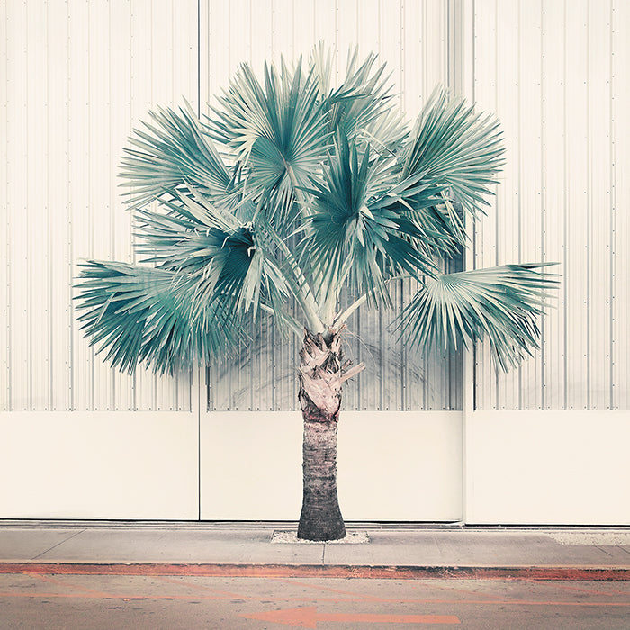 Palm Park - Limited Edition Fine Art