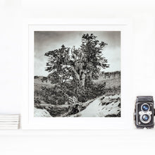 Load image into Gallery viewer, Snowfall and the path to Methuselah - limited edition fine art print