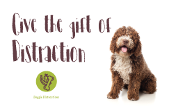 [Best Frozen Dog Treats To Buy Online] - Doggie Distractions