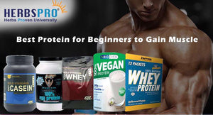 Which is the best protein for beginners to gain muscle?