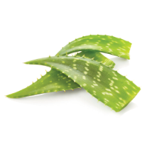 Active Botanical Ingredients - Valentino Haircare - Aloe Vera