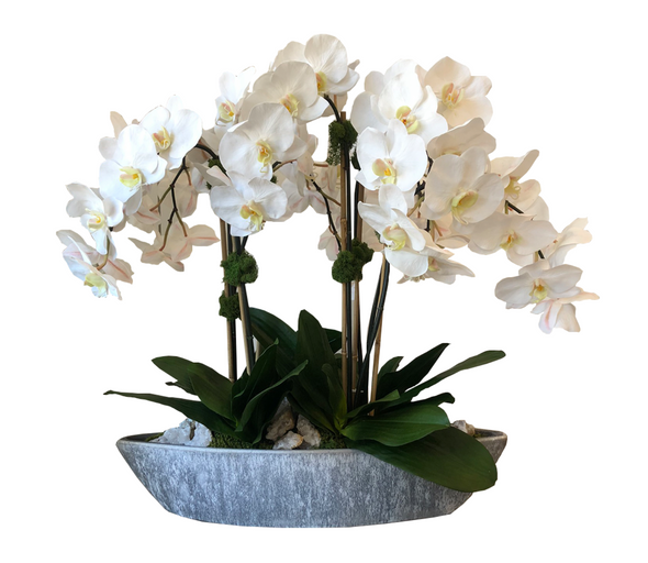 Large Orchids in Cement Boat