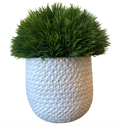 Grass in Ginny Pot (Large)