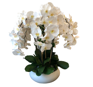 White Low Bowl with Phal Orchids