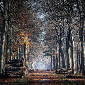 The last leaves of autumn covering a road in the Liesbos, Breda, The Netherlands.
