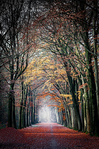 Photo of the Bouvignedreef road covered in autumn leaves, in the Mastbos, Breda, the Netherlands.